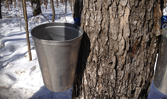 In and Around Ottawa: A Visit to the Sugar Bush
