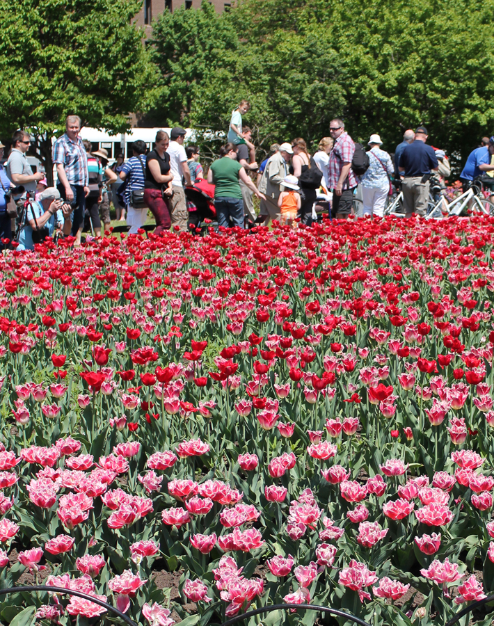 Our Annual Visit to the Canadian Tulip Festival Ottawa