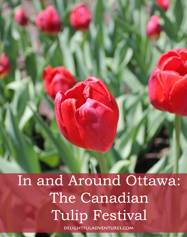 canadian-tulip-festival-ottawa