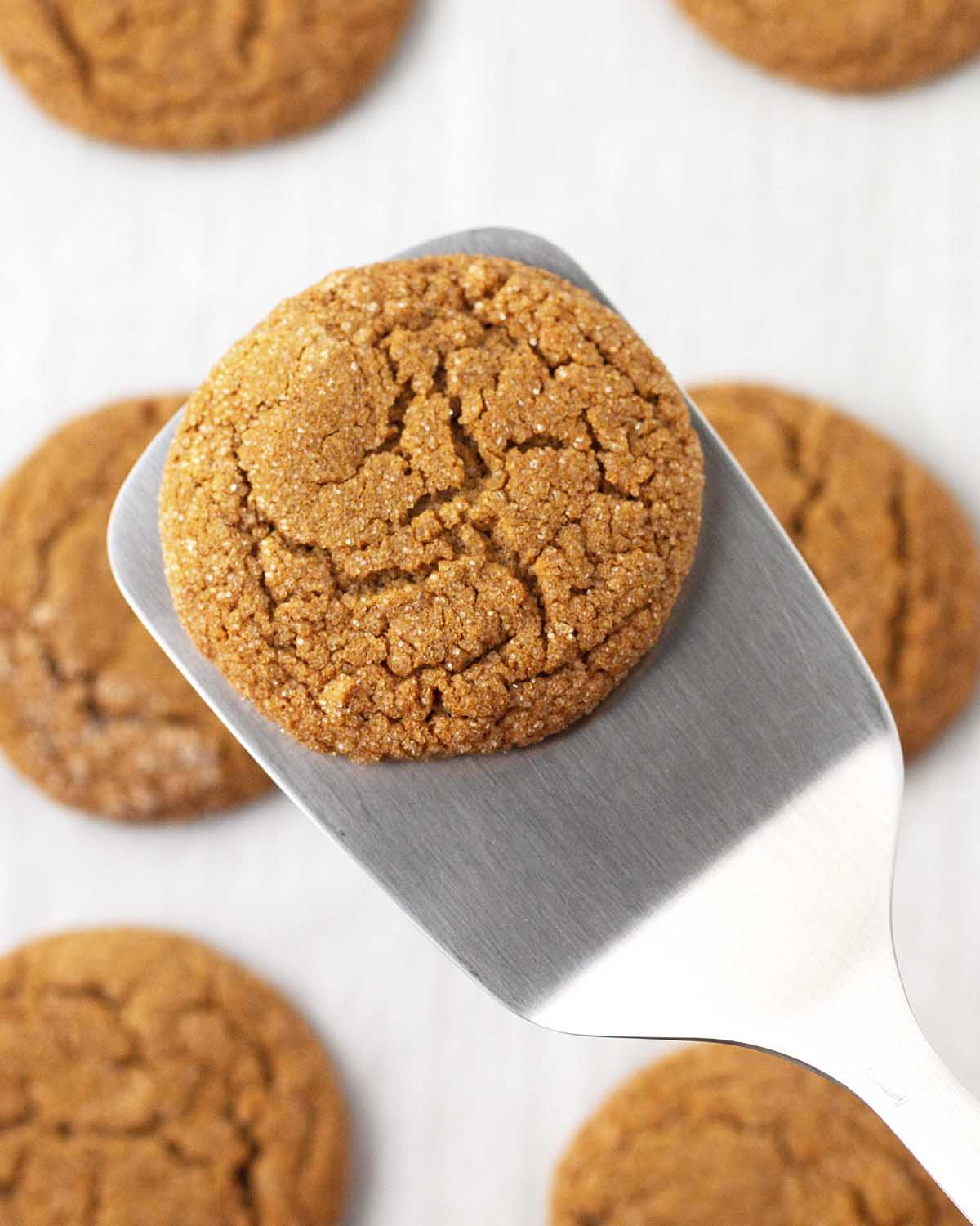 A metal spatula holding one molasses cookie over a pan of more freshly baked cookies.